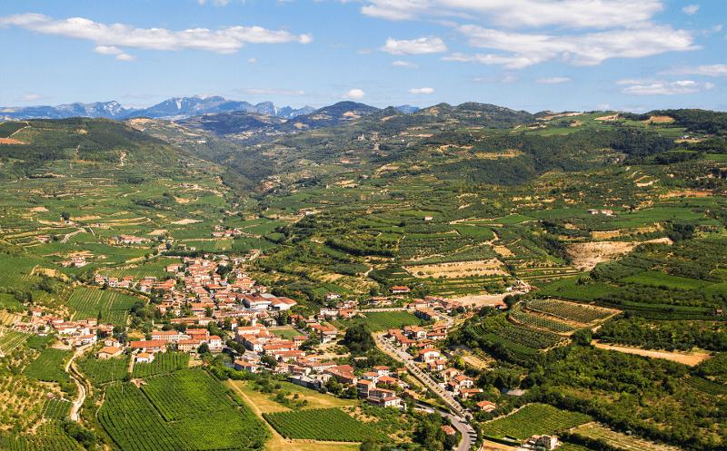 Les vignobles de Conte di Campiano Brindisi au milieu de l'été