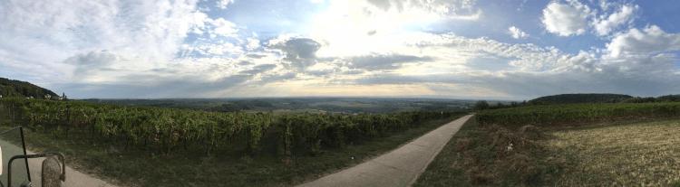 Les vignobles de Lukas Kesselring dans la région du Palatinat, en Allemagne
