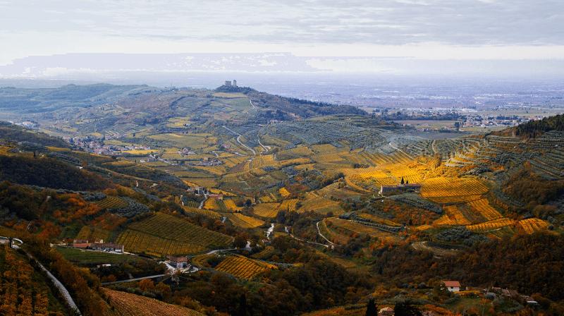 Vignobles Conte di Campiano Brindisi